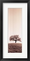 Lone Oak Tree Framed Print