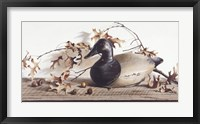 Framed Chesapeake Bay Canvasback