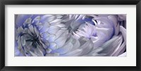 Dahlias 6 Framed Print
