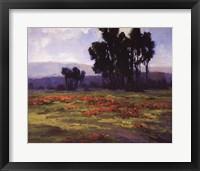 Framed Wild Poppies
