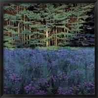 Framed Shadowed Meadow, Sunlit Pines