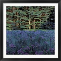 Framed Shadowed Meadow, Sunlit Pines