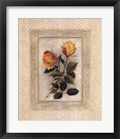 Framed Yellow Tea Rose II