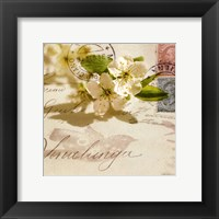 Framed Vintage Letter and Apple Blossoms