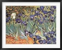 Framed Iris Garden