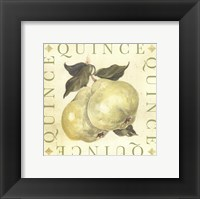 Framed Quince