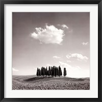 Framed Cypress Trees