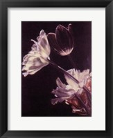 Framed Mixed Tulips
