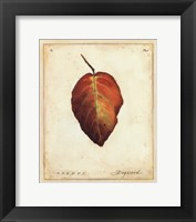 Dogwood Leaf Framed Print