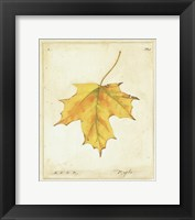 Framed Maple Leaf