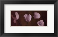 Illuminating Tulips IV Framed Print