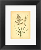 Framed Grasses - with flowers