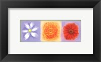 3 Flower Panel Framed Print