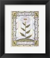Framed Chrysanthemum Leucanthemum