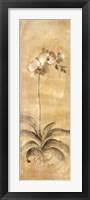Framed White Orchid Panel