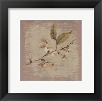 Framed Apple Blossom Square