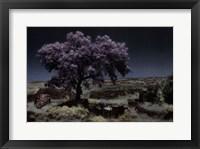 Framed Wisteria Tree