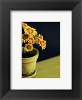 Ganziea Framed Print