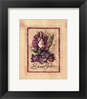 Framed Vintage Sweet Pea
