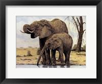 Elephants By The Waterhole Framed Print
