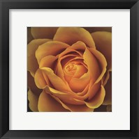 Framed Elegance - Peach Rose