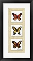 Framed Monarch Butterflies