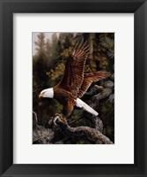 Framed Eagle Perch