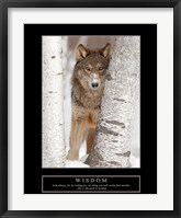 Framed Wisdom - Gray Wolf