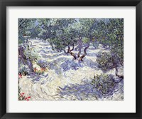 Framed Olive Orchard