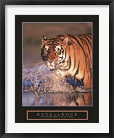 Framed Excellence - Bengal Tiger