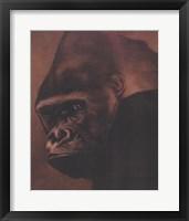 Framed Gorilla Grande