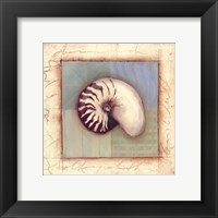 Shell Accents II Framed Print