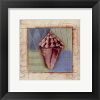 Framed Shell Accents I