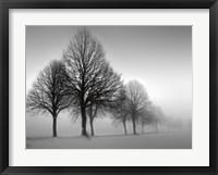 Winter Trees III Framed Print