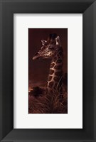 The Graceful One Framed Print
