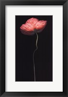 Poppy Solo Framed Print