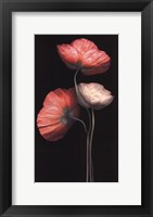 Poppy Trio Framed Print