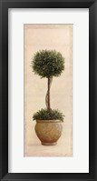 Framed Topiary Ball I