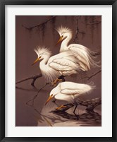 Framed Snowy Egrets