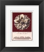 Rosone Antico II Framed Print