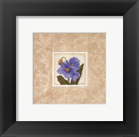 Framed Himalayan Poppy