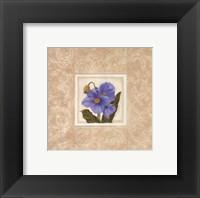 Himalayan Poppy Framed Print