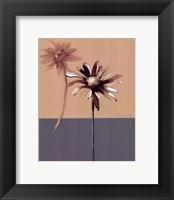 Framed Simplicity 2