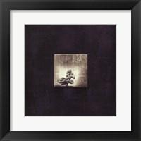 Bonsai Cave Tree Framed Print