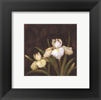 Midnight Iris Framed Print