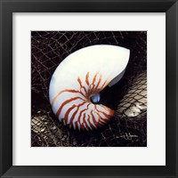 Framed Nautilus Shell With Net