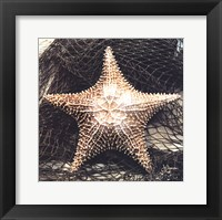 Starfish With Net Framed Print