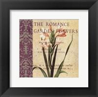 Gladiolus II Framed Print