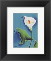 Calla Lily With Blue Framed Print