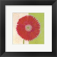 Framed Red Daisy